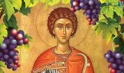 Днес е денят на лозаря – Трифон Зарезан