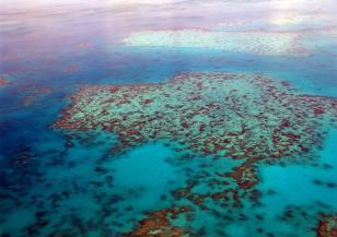 Големият бариерен риф е в опасност