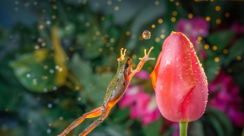 Откриха нов вид жаби в Етиопия