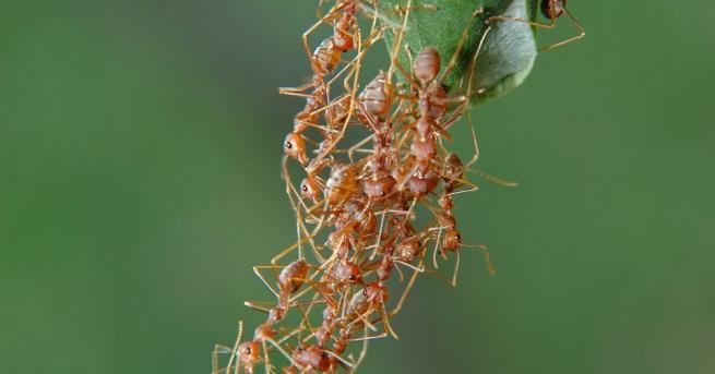 Вдъхновени от мравките, изследователи от Масачузетския технологичен институт са разработили