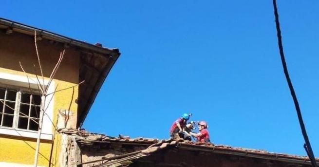 Снимка: Кучета бедстват 7 дни на покрив на училище, алпинисти ги спасяват