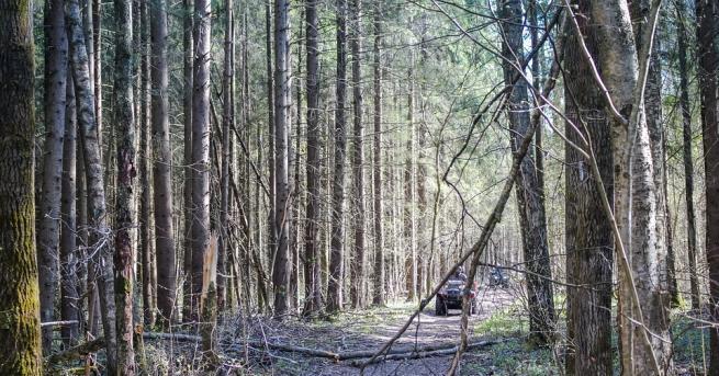 Снимка: Уволниха директора на ДГС-Кресна заради незаконните горски пътища