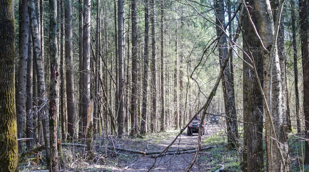Уволниха директора на ДГС-Кресна заради незаконните горски пътища