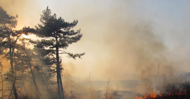 Евакуираха над 9000 души в канадския щат Албърта заради горски