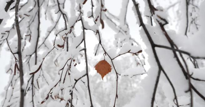 Снимка: Необичайни за сезона студове натрупаха 20 сантиметра сняг на Голанските възвишения