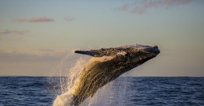 Свят Световният ден на океана и бъдещето на Земята Световният
