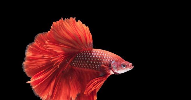 Изключително рядък вид риба, която живее само във водите на