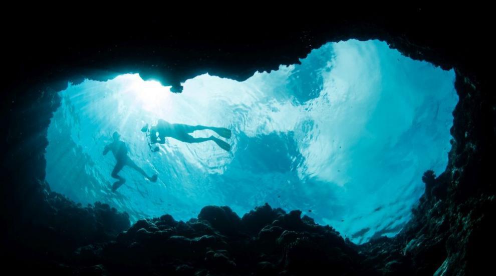 Учени откриха морски същества с неизвестен произход