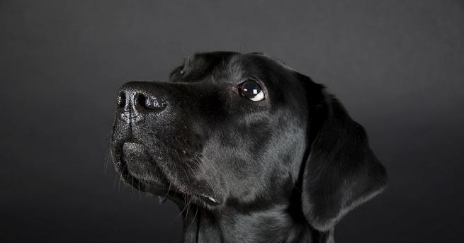 Снимка: Осиновено българско куче спаси стопанката си в Бон, превърна се в герой