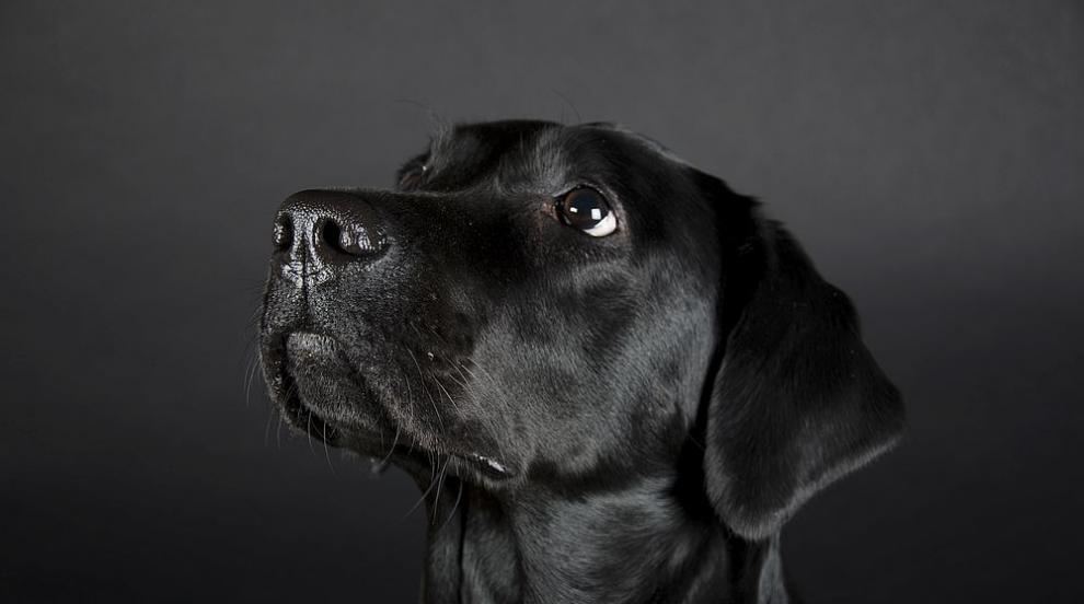 Осиновено българско куче спаси стопанката си в Бон, превърна се в герой