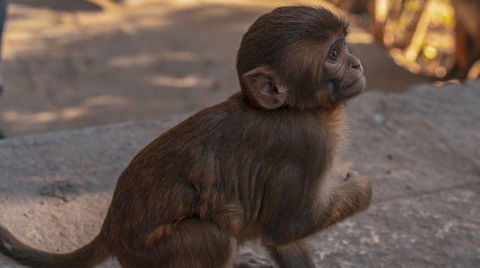 Куче с добро сърце: Еднооката Руби спаси и осинови маймунка (ВИДЕО)
