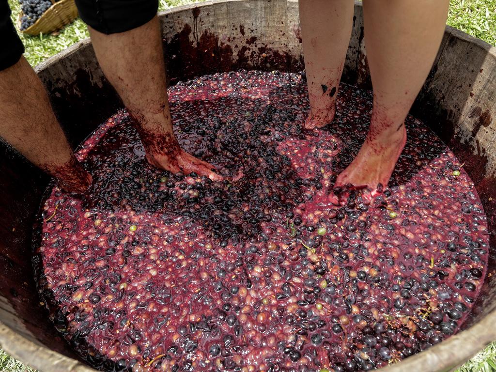 """""""Мога да чакам толкова дълго, колкото е необходимо за естествена ферментация, защото нямам такова голямо търсене. Консумацията на моето вино се прави тук, различна от тази на голяма компания, която трябва да доставя пазара"""", обяснява той."""