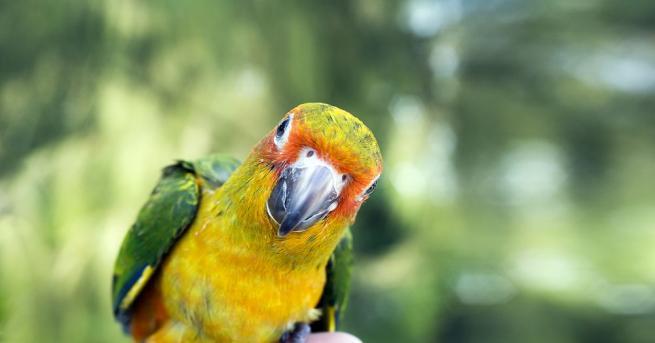 Снимка: Откраднаха рядък вид папагал в Добрич