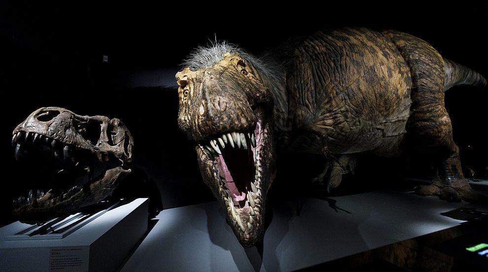 Открит в Канада тиранозавър е най-големият в света