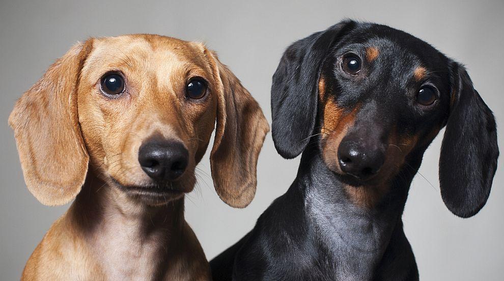 Над половината кучкари спят с кучетата, вместо с партньорите си