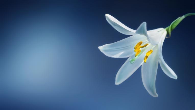 Дневен хороскоп за вторник, 21 април