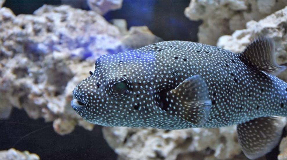 Уникален аквариум с морска вода и екзотични риби в Пловдив (СНИМКИ)
