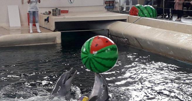 Семейството на делфините във варненския Делфинариум се радва на нова