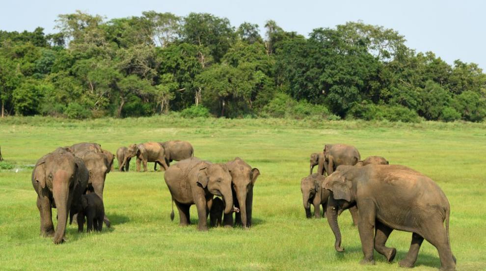 Розов слон се роди в Южна Африка (СНИМКИ)