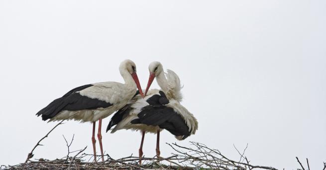 ЧЕЗ Разпределение България и Българско дружество за защита на птиците