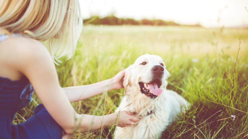 жена куче