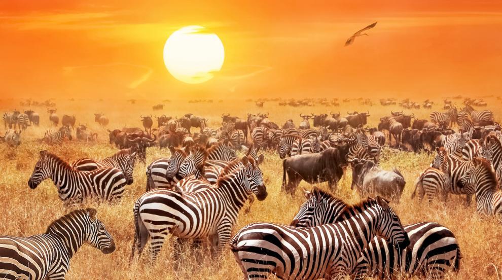 """За първи път: Фотограф засне """"руса"""" зебра в естествена среда (СНИМКИ)"""