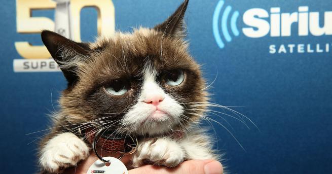 Почина Сърдитата котка (Grumpy cat), най-известната писана в света, която