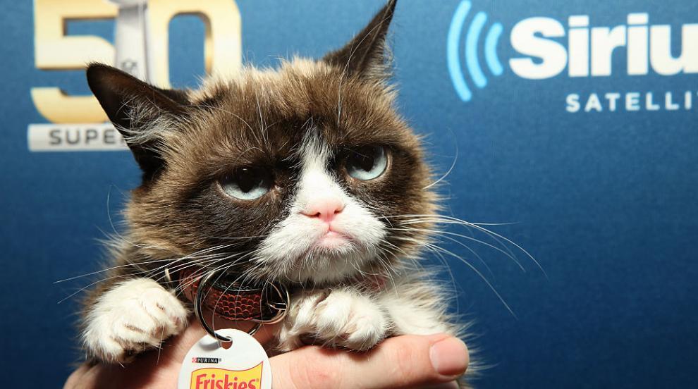 Почина известната Grumpy Cat – най-сърдитата котка в света