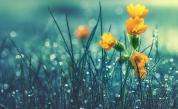 Дъждовен уикенд, кога ще спре да вали
