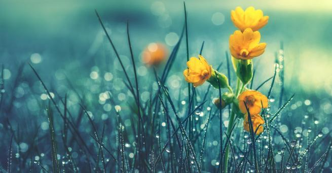 България Днес слънчево и тихо, от утре отново дъжд и