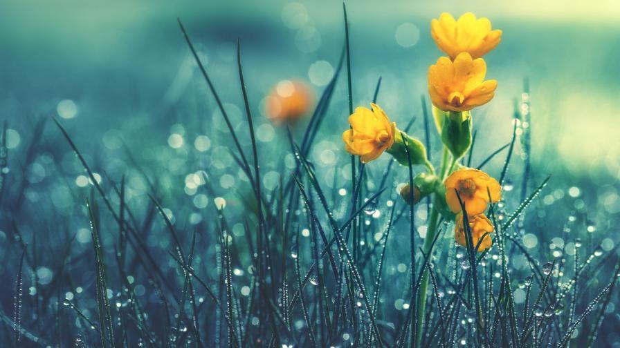 Днес слънчево и тихо, от утре отново дъжд и градушки