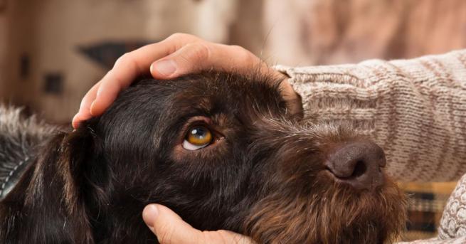 Фактът, че кучетата могат да надушват ракови заболявания не е