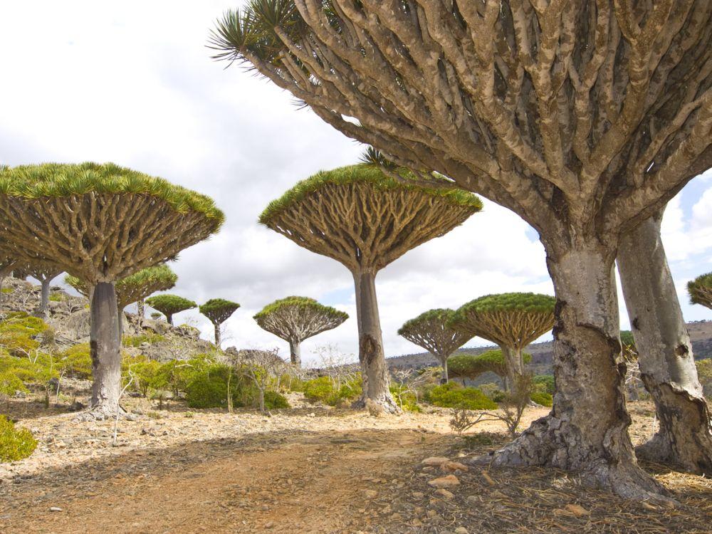 Сокотра се намира на около 250 километра от Сомалия и на 340 километра от Йемен