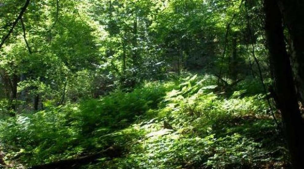 Специалисти по грижа за дърветата премахват опасни тополи в Гробищния...