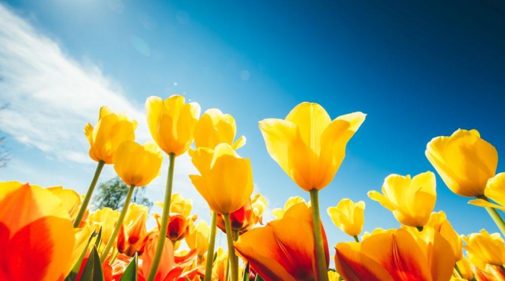 Цветница е! Празнуват всички с имена на цветя