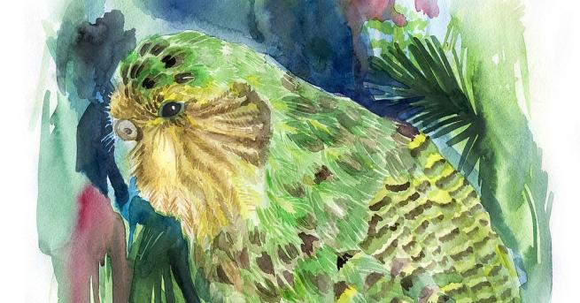 Рекорден брой пиленца от застрашения вид безкрили папагали какапо са