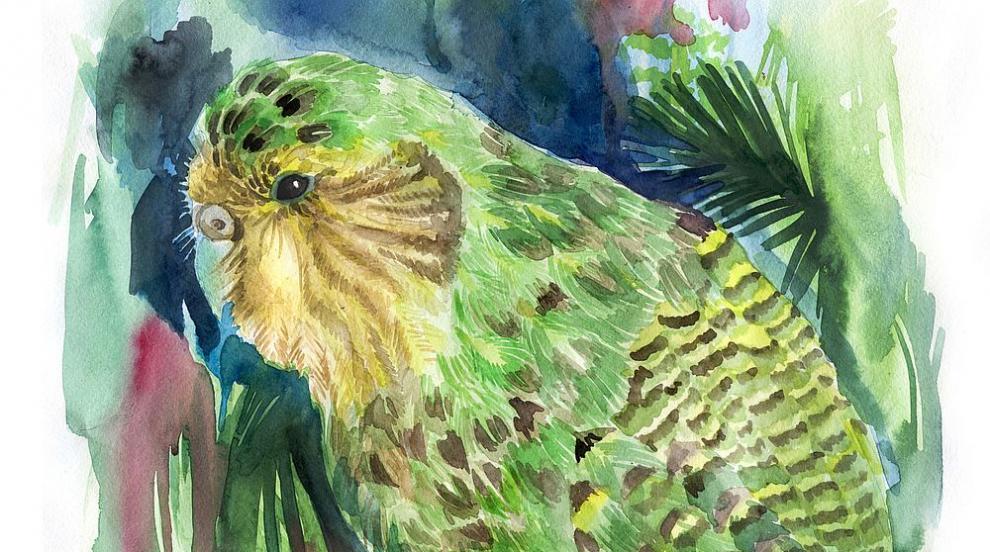 """Рядък вид """"дебели и едри"""" папагалчета се излюпиха в Нова Зеландия (СНИМКИ)"""