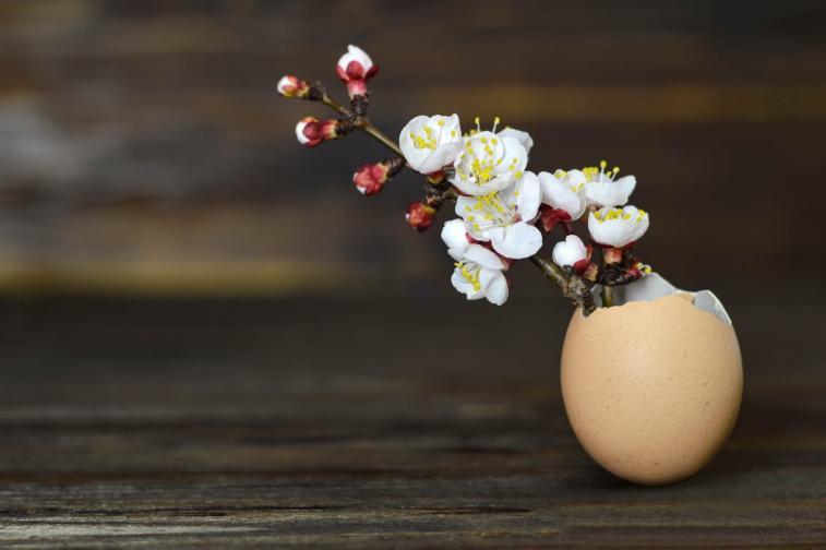 Кошничка за цветя<br /> Може да оставите яйчените черупки и неоцветени, по този начин също са красиви. Почистете ги добре отвътре и отвън и сложете в тях цвете по ваш избор.