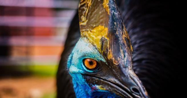Голямата птица казуар, приличаща на щраус, която неотдавна уби собственика