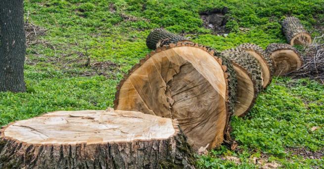 Методика за оценка и определяне нивата на добитата дървесина ще