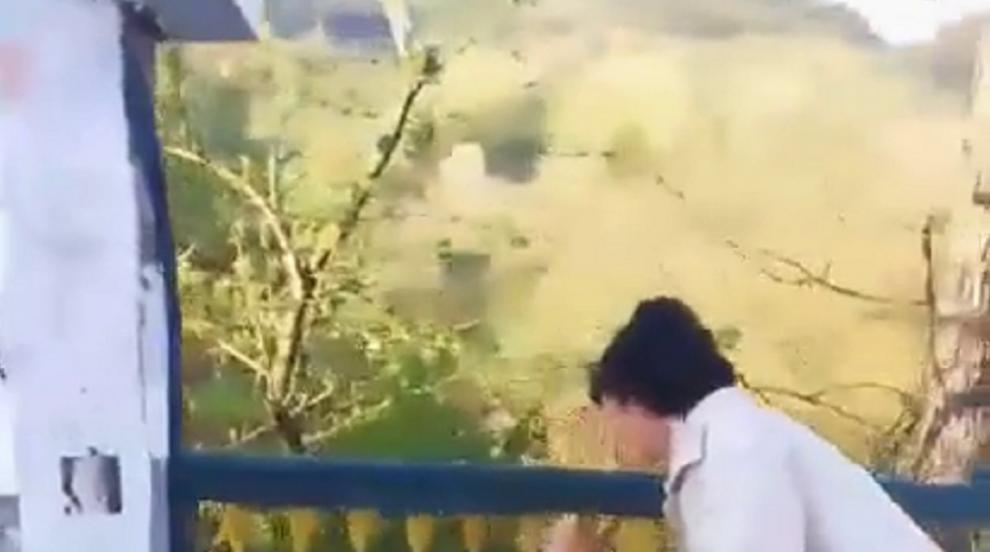 Смолянчани спасиха сърна, заклещена в метална ограда