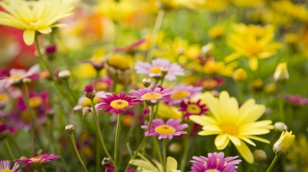 Седмицата започва с типично пролетно време