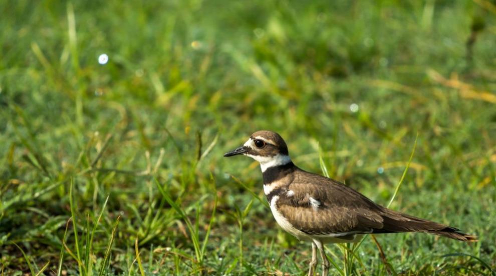 Птиче снесе яйца до футболна врата, отборът си търси друго игрище (СНИМКИ)