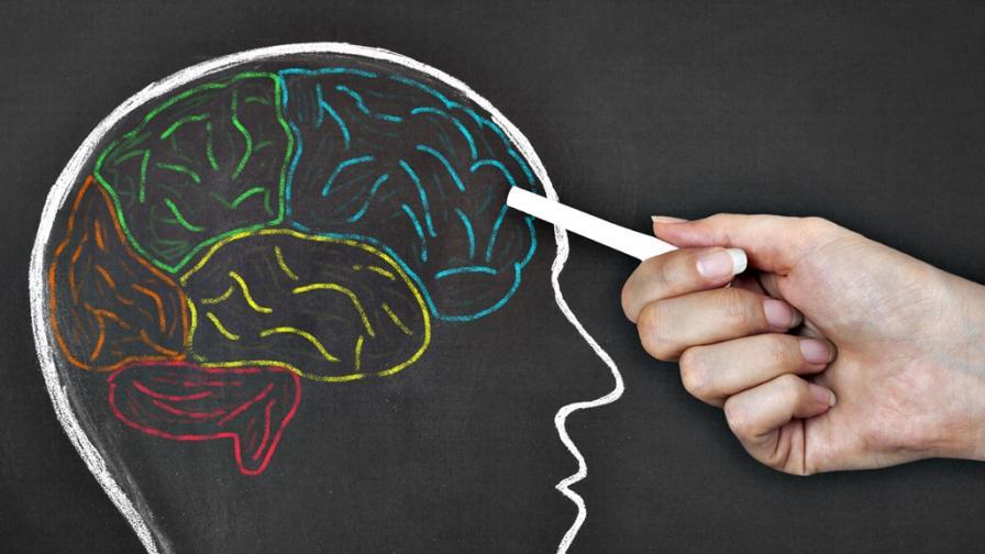 <p><strong>Митове за мозъка</strong> и ученето, на които <strong>сляпо вярваме</strong></p>