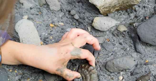Учени откриха най-древните останки от многоклетъчни форми на живот, които