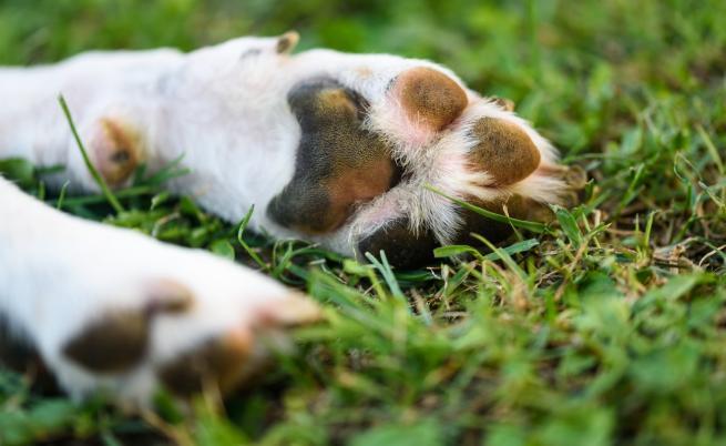 Защо мъж прегази кучето на съседите си в Ямбол