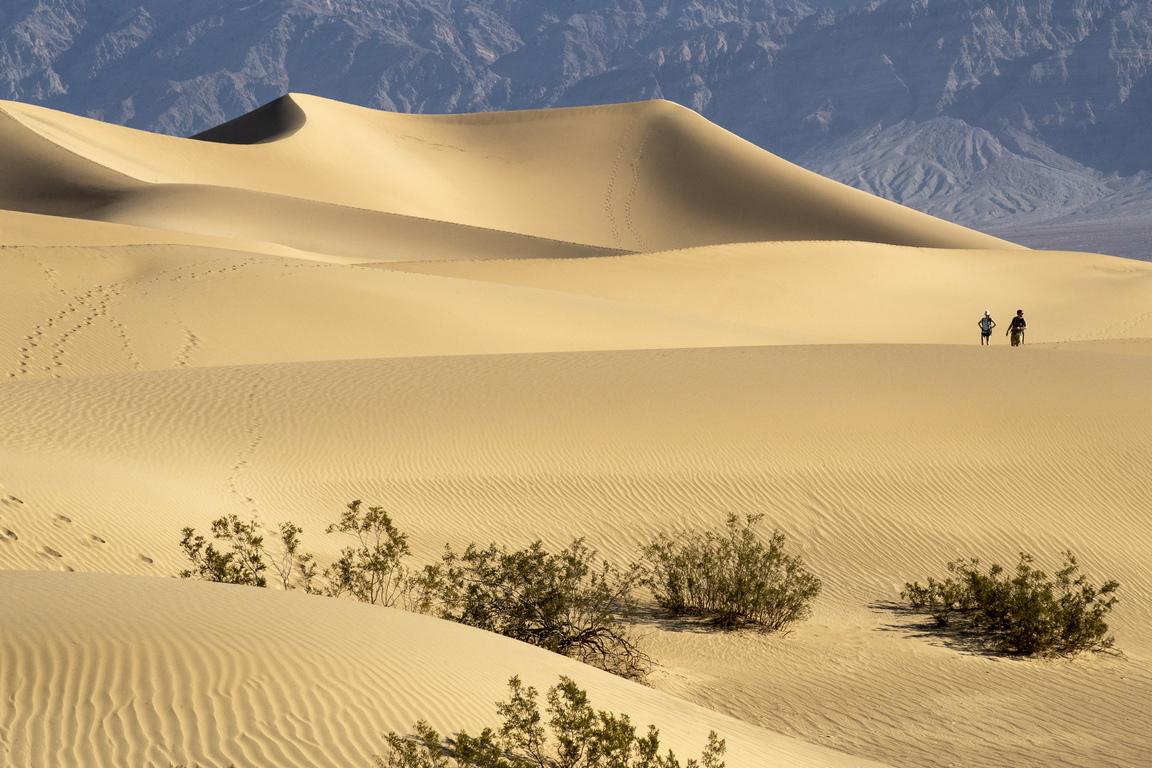 Мескит е дърво, което вирее в Северна Америка и се използва за добив на каучук.