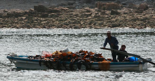 Южнокорейските власти съобщиха, че четирима севернокорейски рибари са били спасени