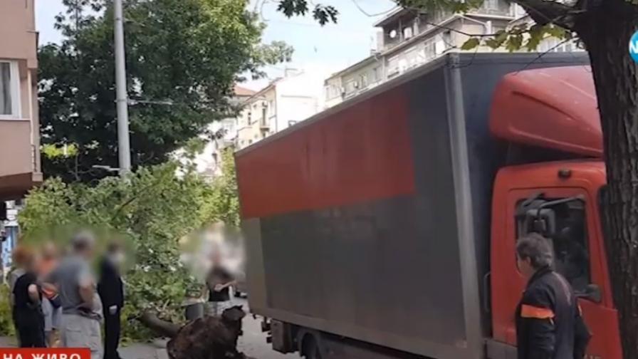 Шофьор бутна дърво в центъра на София