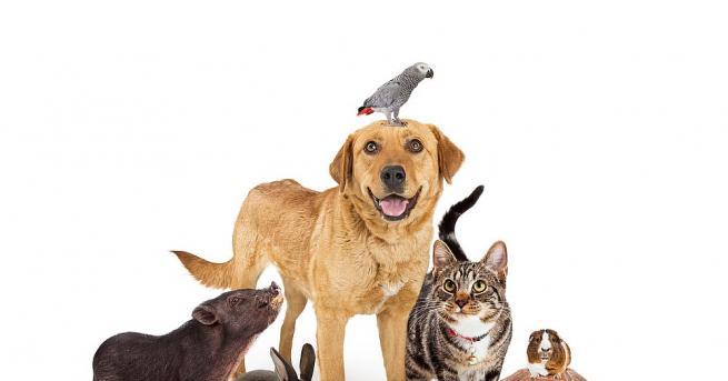 Изборът на домашно животинчетрябва да подхожда на характера ви, да